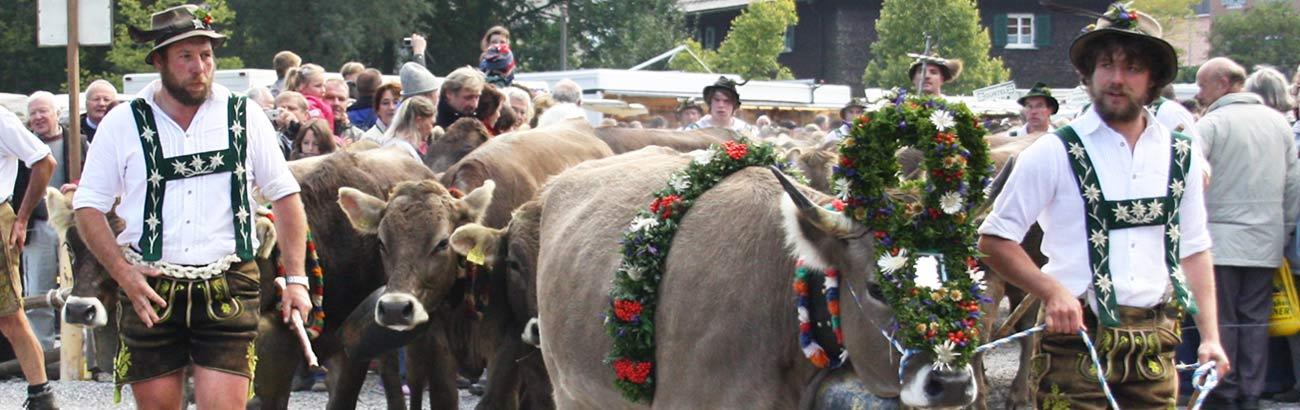 Viehscheid Allgäu - Infos und Termine vom Allgäuer Viehscheid